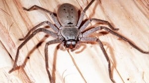 get rid of spiders in house